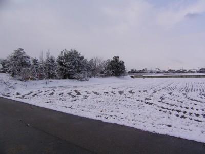 20110303.JPG